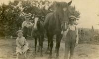 The Mohr Brothers with their horse and her colt<br /> circa 1913